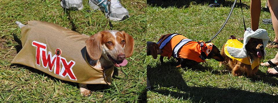 <b>Costume Contest</b> - Enter your dog this year!